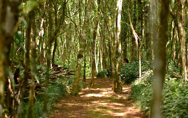https://www.parqueanaua.com.br/wp-content/uploads/2020/06/conheca-floresta.jpg