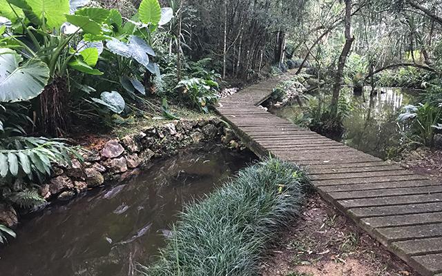 https://www.parqueanaua.com.br/wp-content/uploads/2020/06/conheca-trilhas.jpg