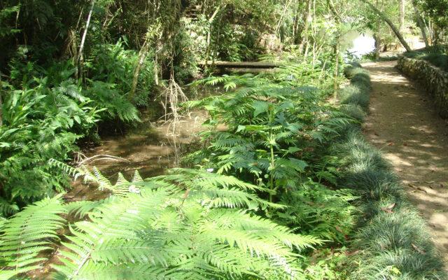 header-floresta